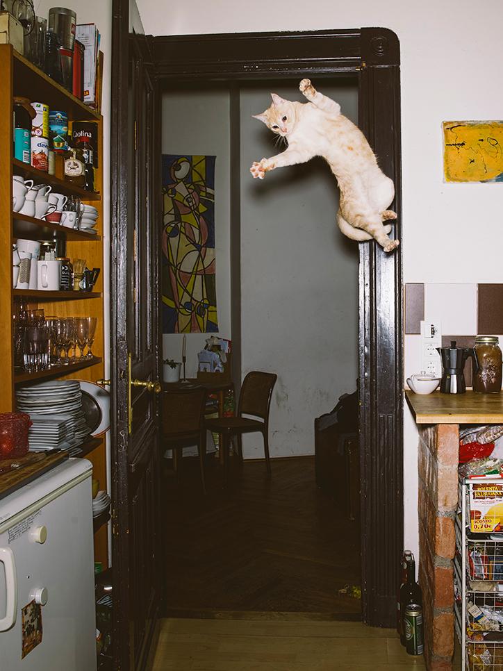 Bộ ảnh chứng minh mèo có thể tạo 69 tư thế bay nhảy khác nhau