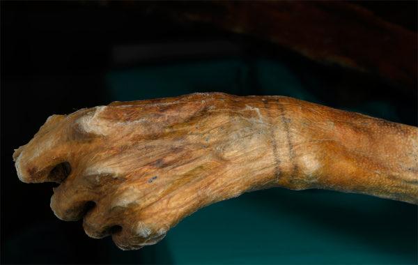 Hình xăm cổ nhất thế giới được phát hiện trên xác ướp Ai Cập hơn 5200 tuổi