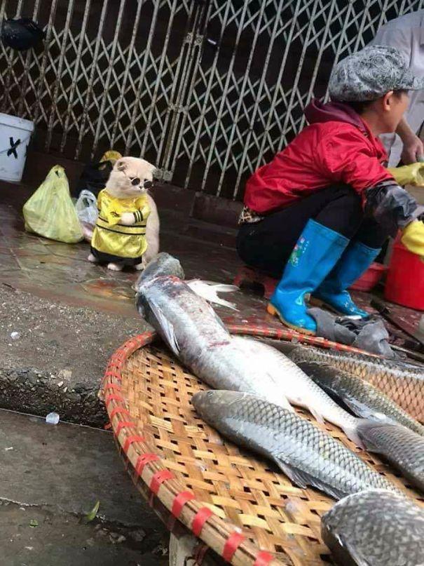 Chú mèo 'hoàng thượng' của Việt Nam đã vi hành sang tận... báo nước ngoài