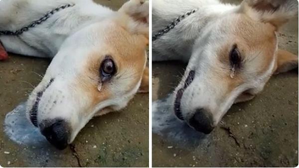Chú chó bị đánh bả được cứu sống thần kỳ nhờ ăn trứng gà