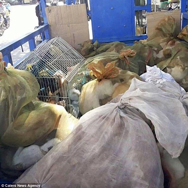 Báo nước ngoài lên án tình trạng ăn thịt mèo ở Việt Nam