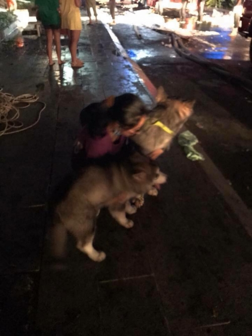 Số phận các em thú cưng sau vụ hỏa hoạn ở chung cư Carina?