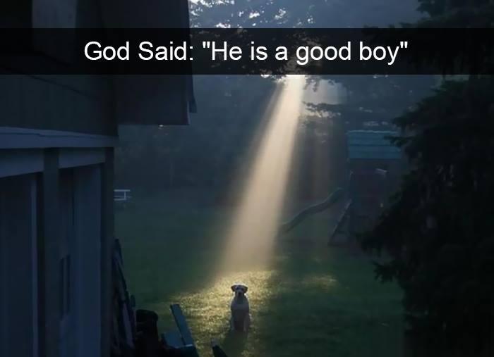 Hãy để những chú cún thắp sáng ngày đầu tuần của bạn