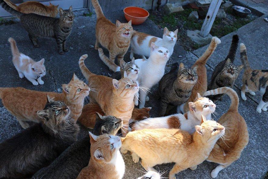Đảo mèo ở Nhật quá tải thức ăn sau khi kêu gọi giúp đỡ trên internet