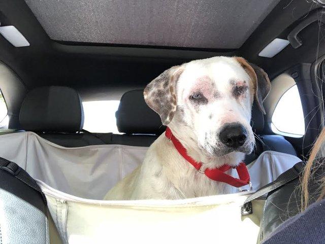 2 chú chó sợ hãi nằm ra đường khi bị chủ nhân đưa vào trại nuôi giữ động vật