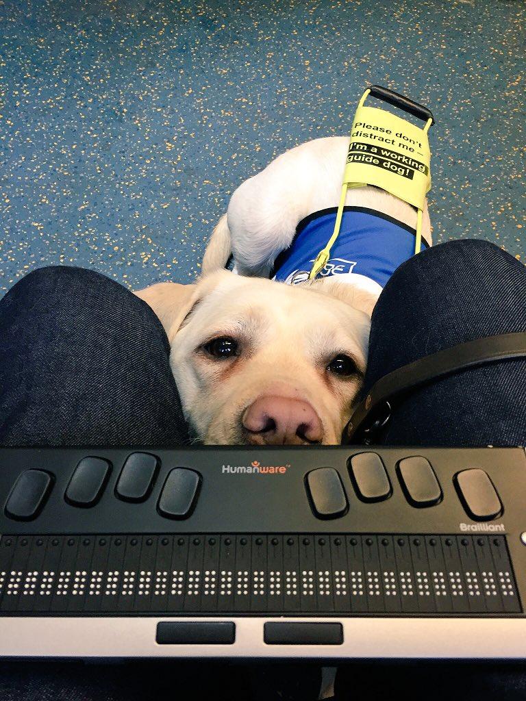 Người đàn ông mù bật khóc khi không ai nhường chỗ ngồi cho mình và chú chó dẫn đường