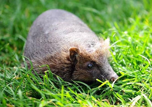 Khó lòng nhận ra 15 động vật quen thuộc này khi chúng không có lông