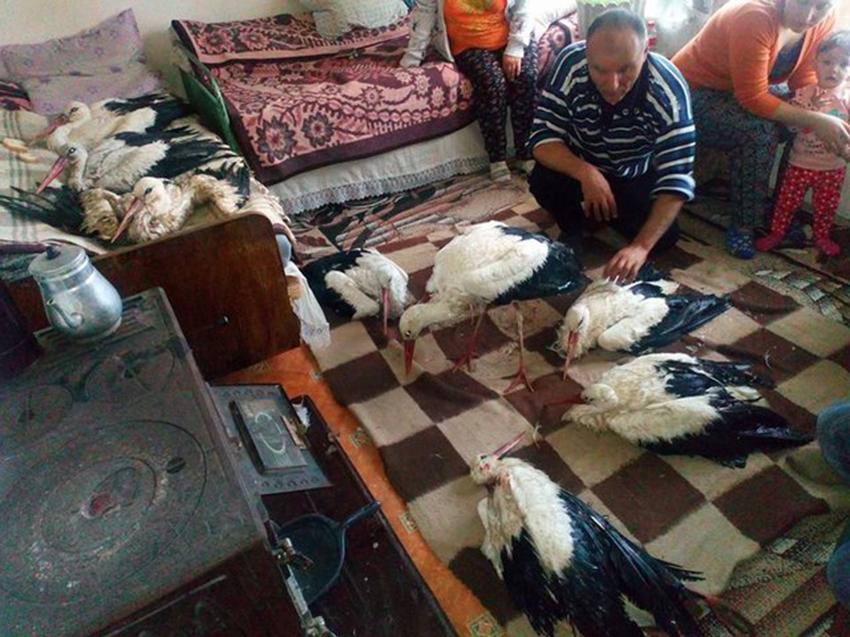 Dân Bungari mở cửa nhà đón cò hoang dã vào sưởi ấm giữa ngày giá rét