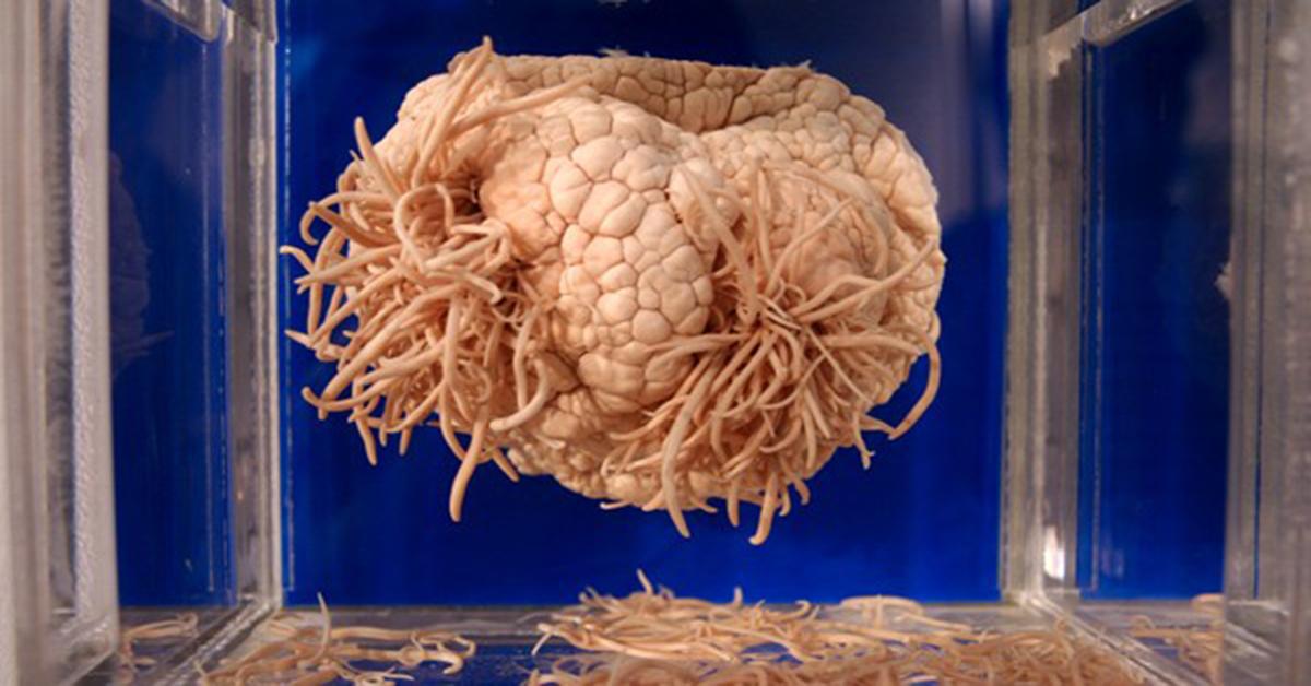 Cơ thể người và những điều kỳ lạ khiến giới khoa học cũng 'há hốc mồm'