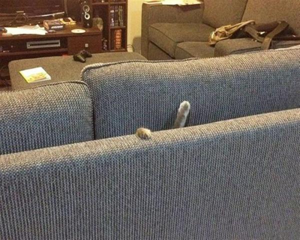 Mèo là 1 loại chất lỏng, nhưng thỉnh thoảng cũng không đúng lắm...