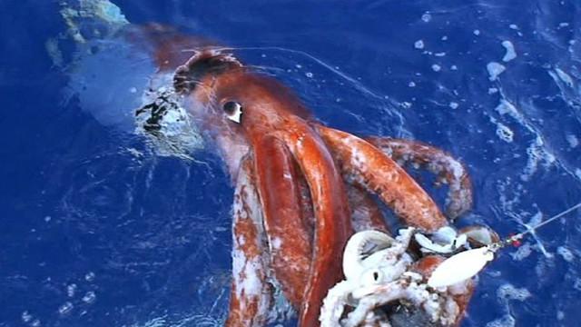 25 sinh vật đáng sợ nhất ẩn náu dưới đáy biển sâu (P.1)