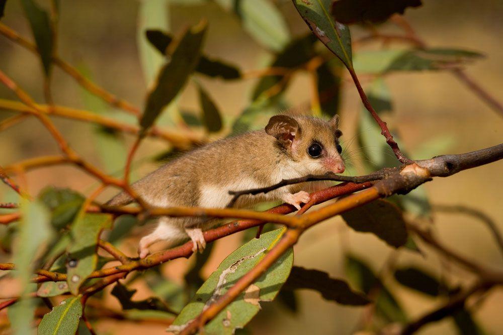 10 loài động vật 'mini size' nhưng vẫn sống rất 'dai'