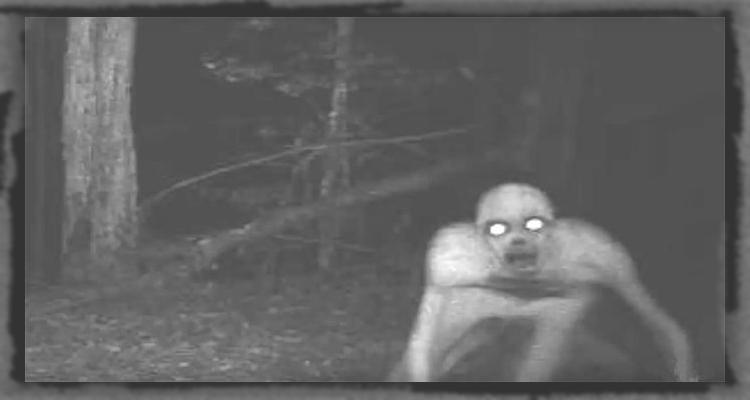 Lang thang trong rừng đêm khuya và bắt gặp những cảnh tượng kinh hoàng