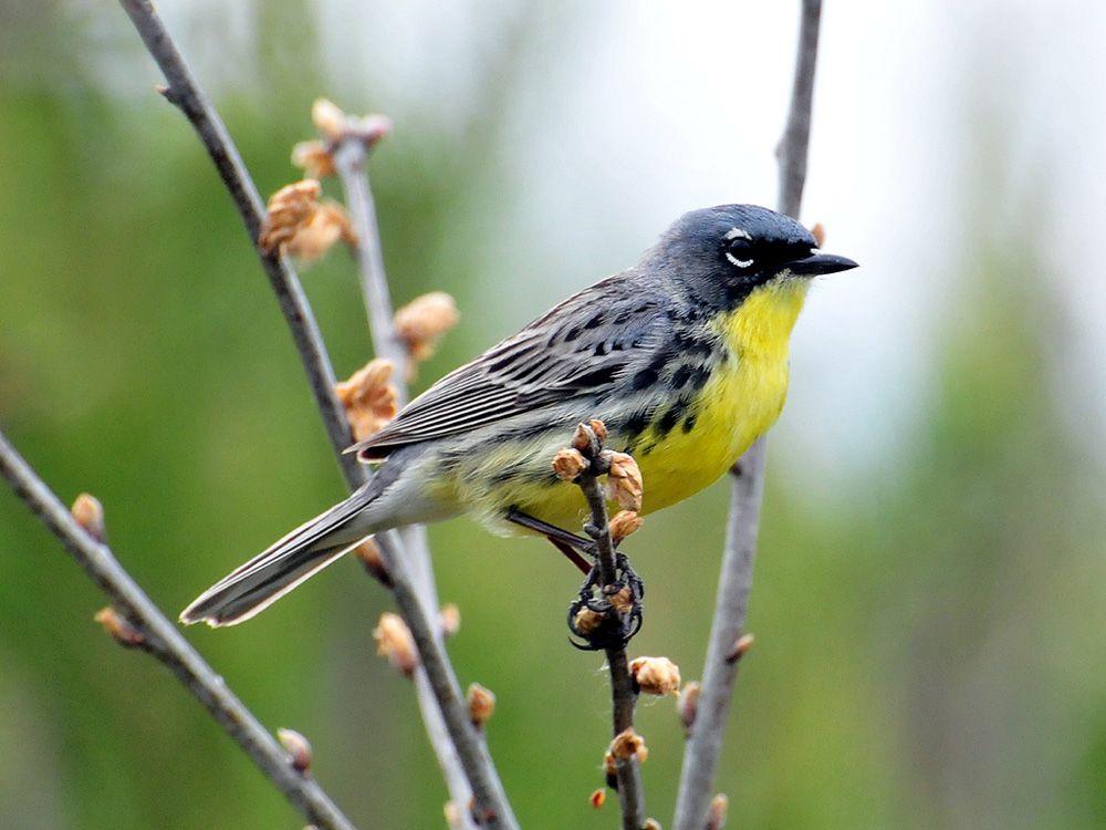 Vẻ đẹp của 10 loài chim quý đang có nguy cơ bị tuyệt chủng