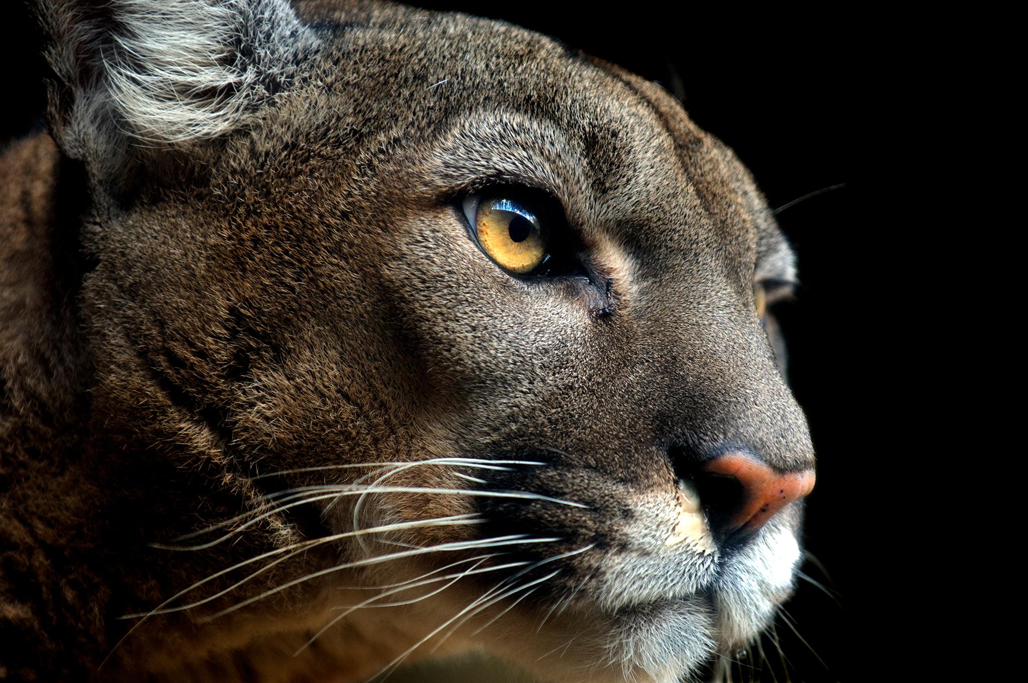 Báo Phương Đông - Sinh vật tuyệt đẹp và kì vĩ đã chính thức tuyệt chủng
