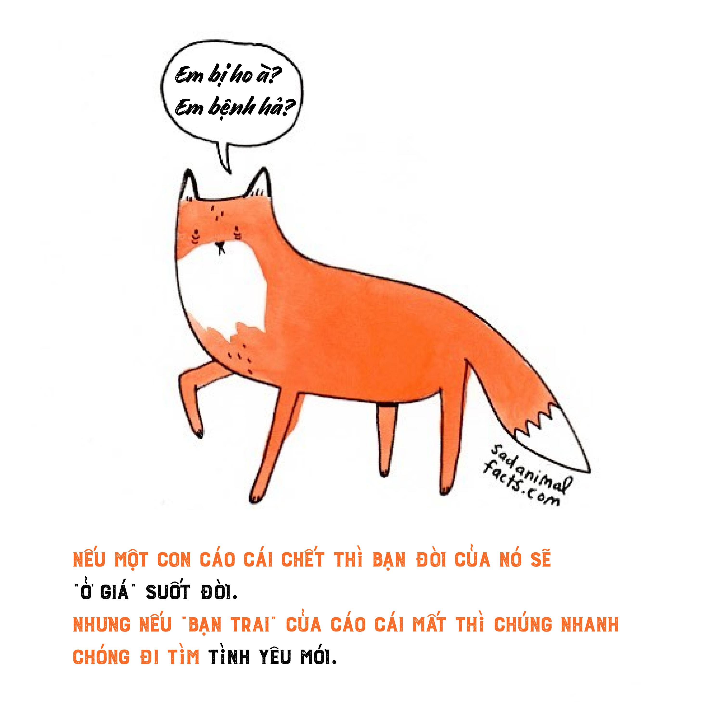Bộ tranh: 25+ sự thật 'nghiệt ngã' về động vật mà bạn chưa chắc đã biết (P1)