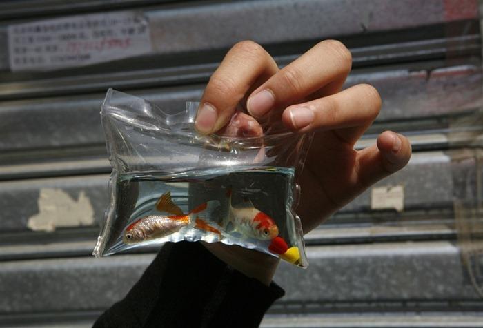 Trung Quốc vẫn bày bán 'móc khoá động vật sống' dù đã bị lên án nhiều năm