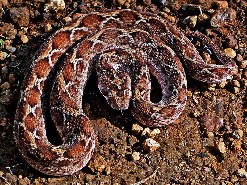 15 loài vật độc nhất hành tinh khuyên bạn không nên dại dột đụng vào