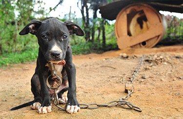 Cô chó nhỏ bật khóc sau khi được giải cứu khỏi lò giết mổ ở Trung Quốc
