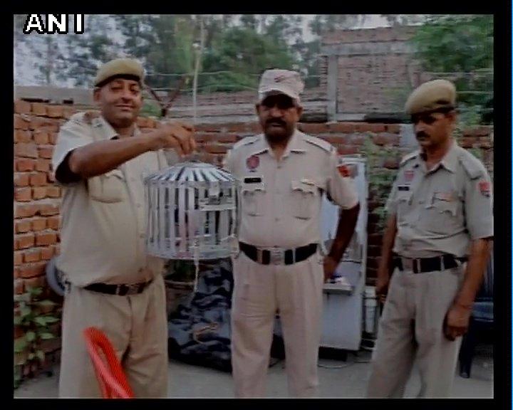 Chết cười với các 'tội phạm động vật' từng bị cảnh sát bắt giữ (P1)