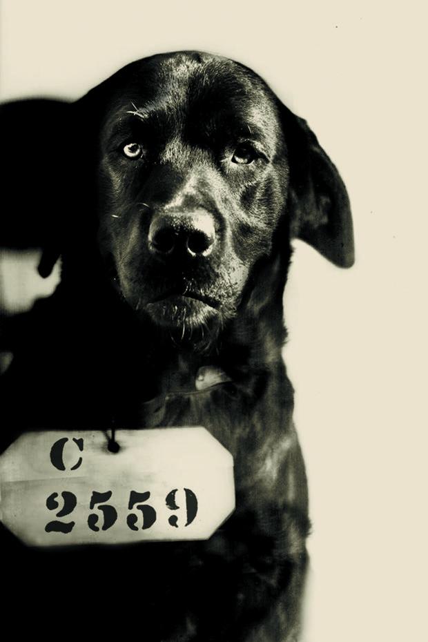 Chết cười với các 'tội phạm động vật' từng bị cảnh sát bắt giữ (P2)