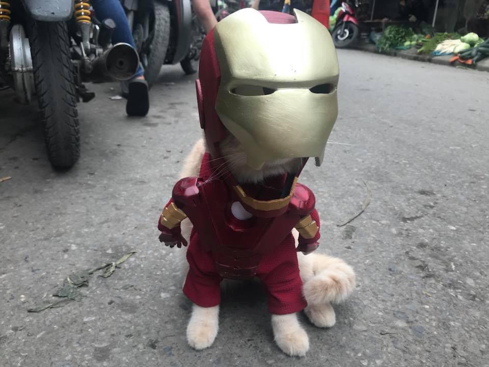 Chú mèo Chó lại cosplay thành siêu anh hùng khiến các fan tha hồ 'bão like'