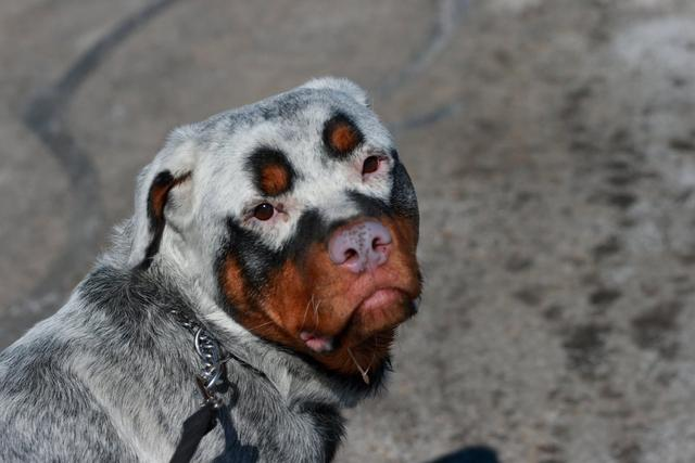 Những động vật có màu sắc khác thường khiến bạn tưởng đó là sản phẩm Photoshop