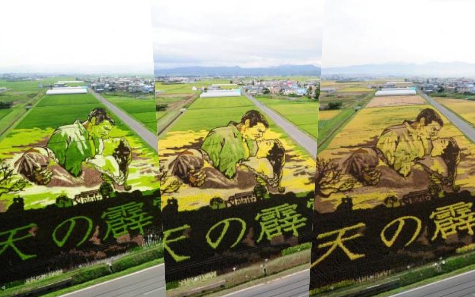 Chuyện chỉ có ở Nhật Bản: Khi nghệ thuật và nông nghiệp cùng nhau thăng hoa