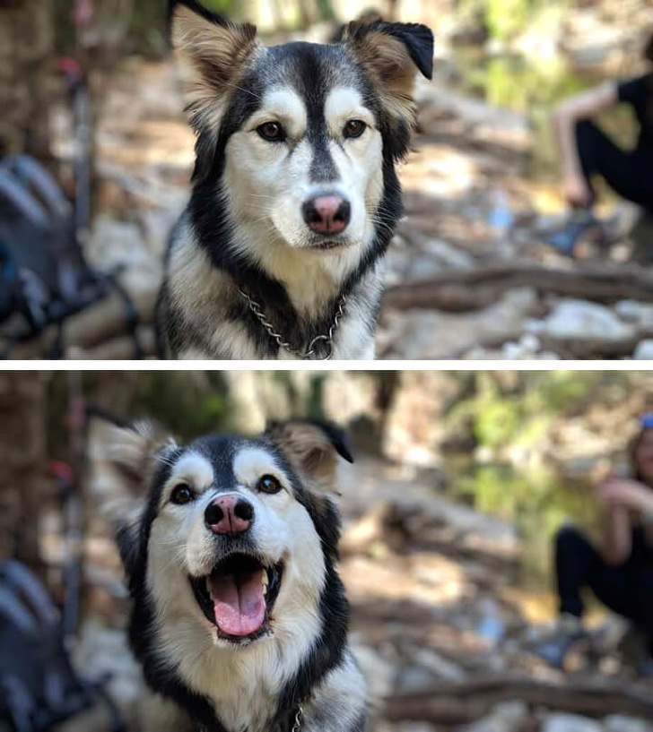 20 bức hình về hành động 'cute hột me' của thú cưng khiến ngày của bạn bớt nặng nề