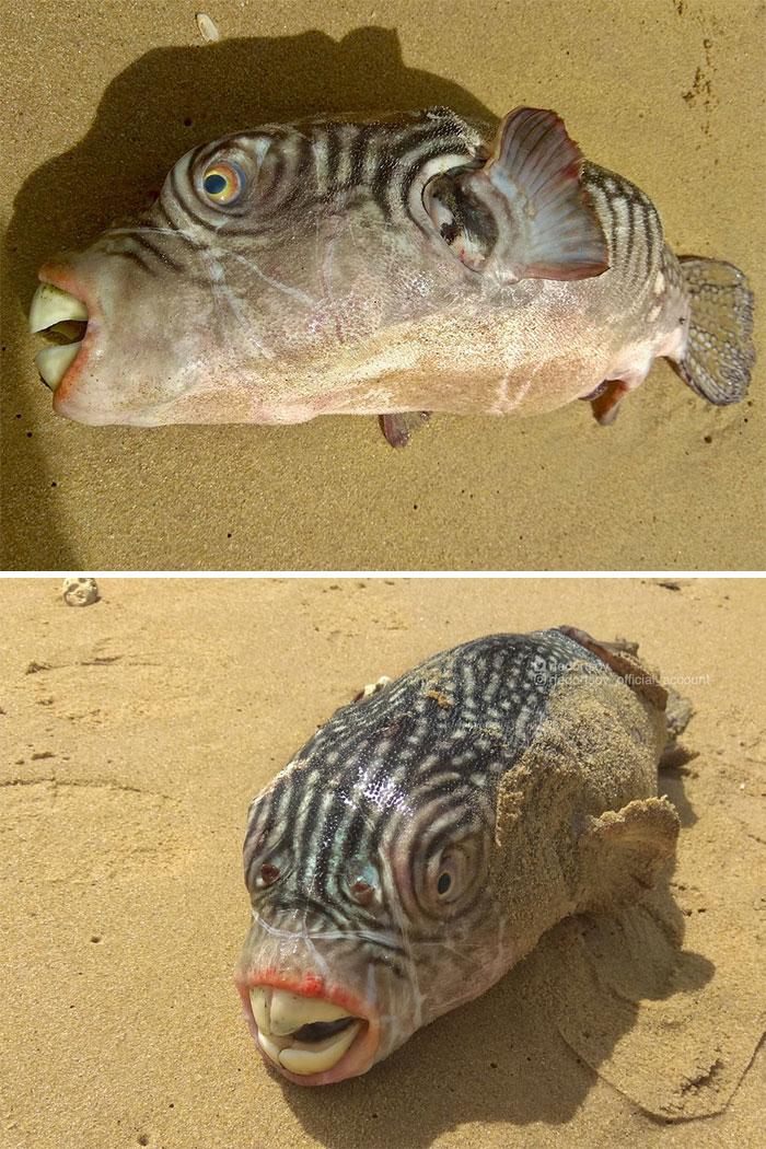 Bộ sưu tập sinh vật đại dương quái dị hiếm thấy của ngư dân Nga