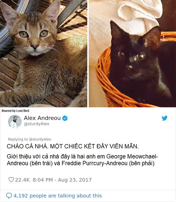 Anh chàng đồng tính bị từ chối cho nhận mèo và hành trình gian nan để tới với các 'boss'