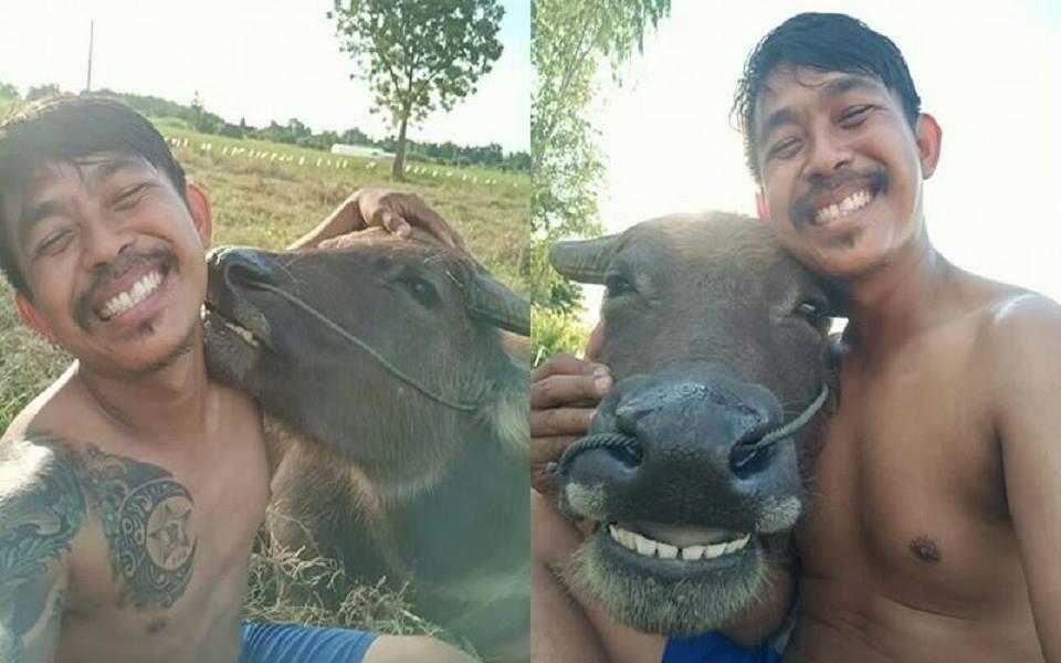 Tình bạn dễ thương 'có ruộng cùng cày, có điện thoại cùng selfie' giữa anh nông dân và trâu cưng