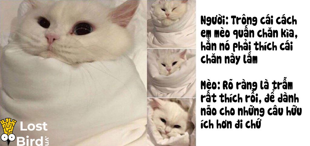 Từ điển tiếng Mèo cho các sen cuồng boss cuối cùng cũng ra mắt
