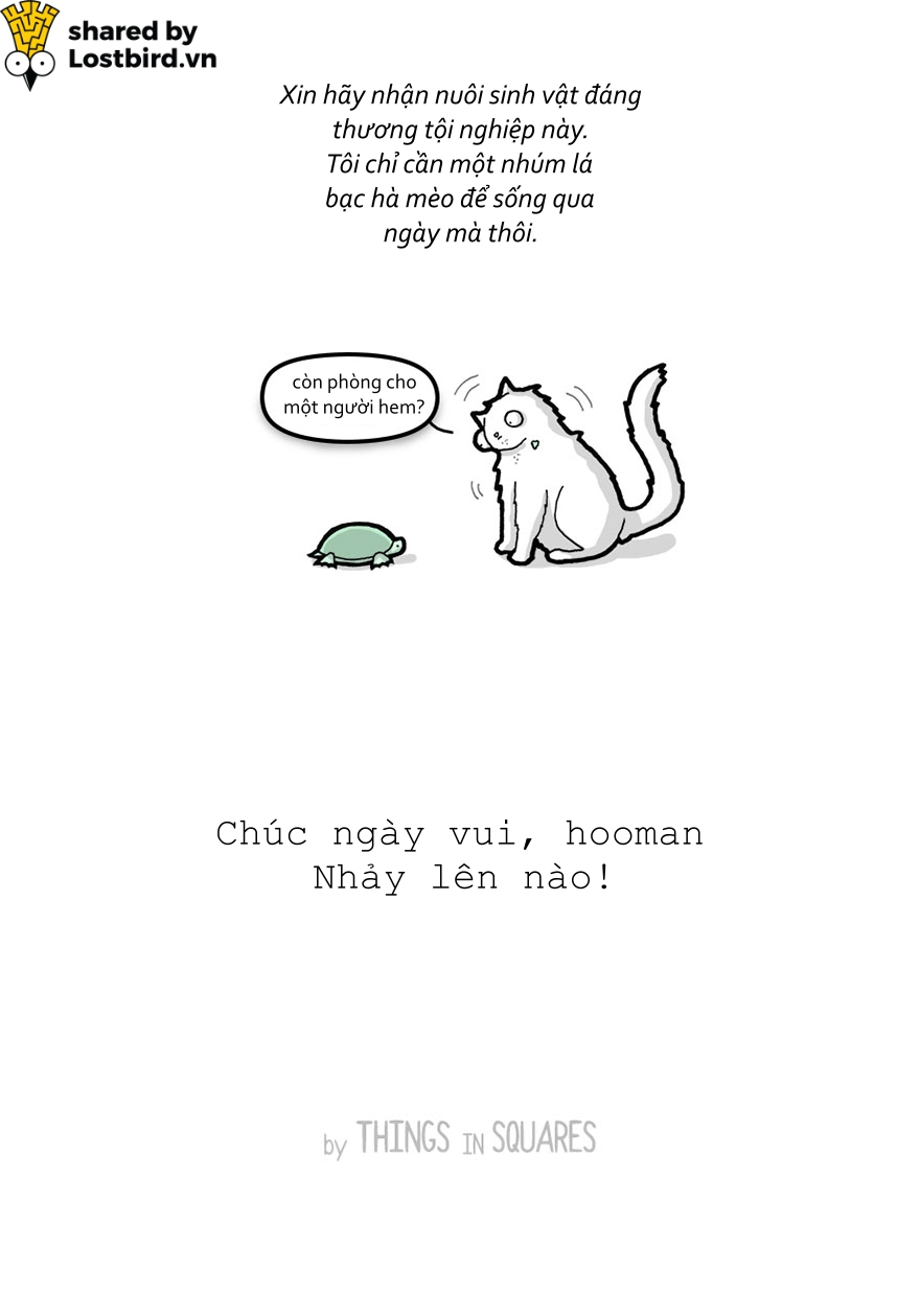 Hãy xem loài mèo trịch thượng và vô lý thế nào trong bức tâm thư chúng gửi cho ta