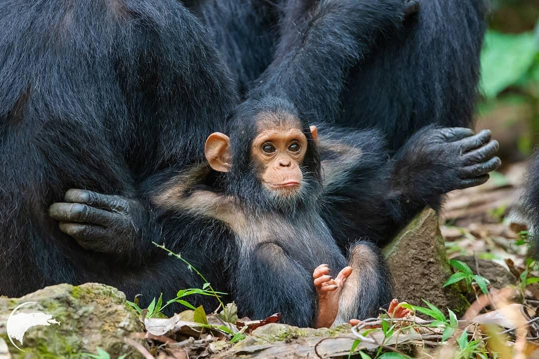 17 cặp mẹ con động vật siêu cấp đáng yêu khiến bạn ngưỡng mộ tình mẫu tử trong thế giới tự nhiên