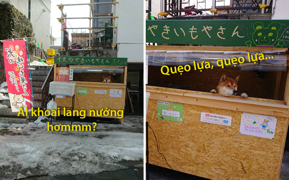 Góc tự lập: Em chó Shiba Inu mở xe bán khoai lang nướng ngoài đường phố Nhật Bản