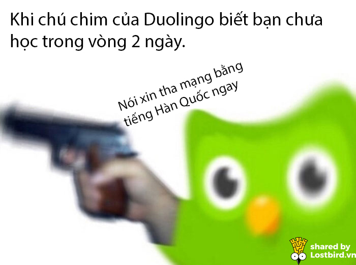 25 meme hài hước về chú cú nhắc học bài của Duolingo