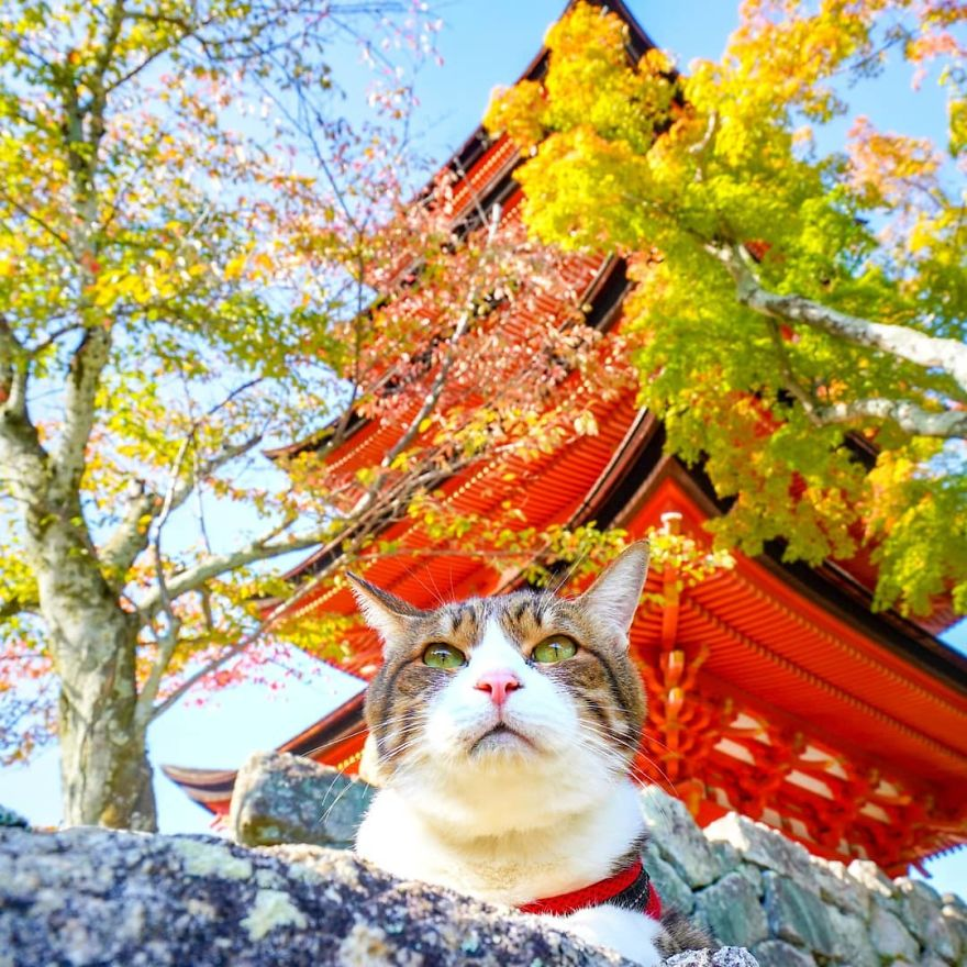 'Sen' Nhật thu hút hàng nghìn người theo dõi trên Instagram khi du hí suốt 8 năm với hai boss mèo