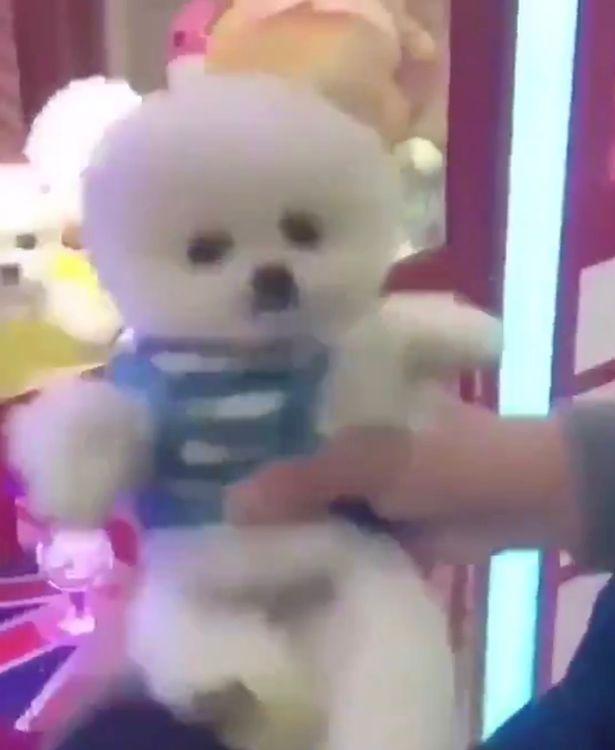 Khu vui chơi gây tranh cãi khi nhốt chó thật trong hộp, dùng nó làm phần thưởng trò máy gắp thú