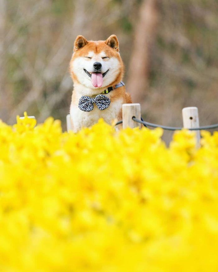 Tan chảy trước hình ảnh đáng yêu muốn xỉu của Hachi - chú chó yêu hoa