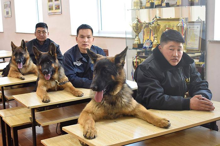 Trong khi bạn ngồi chơi, lũ thú cưng đã có 'business' riêng của mình rồi đấy nhé