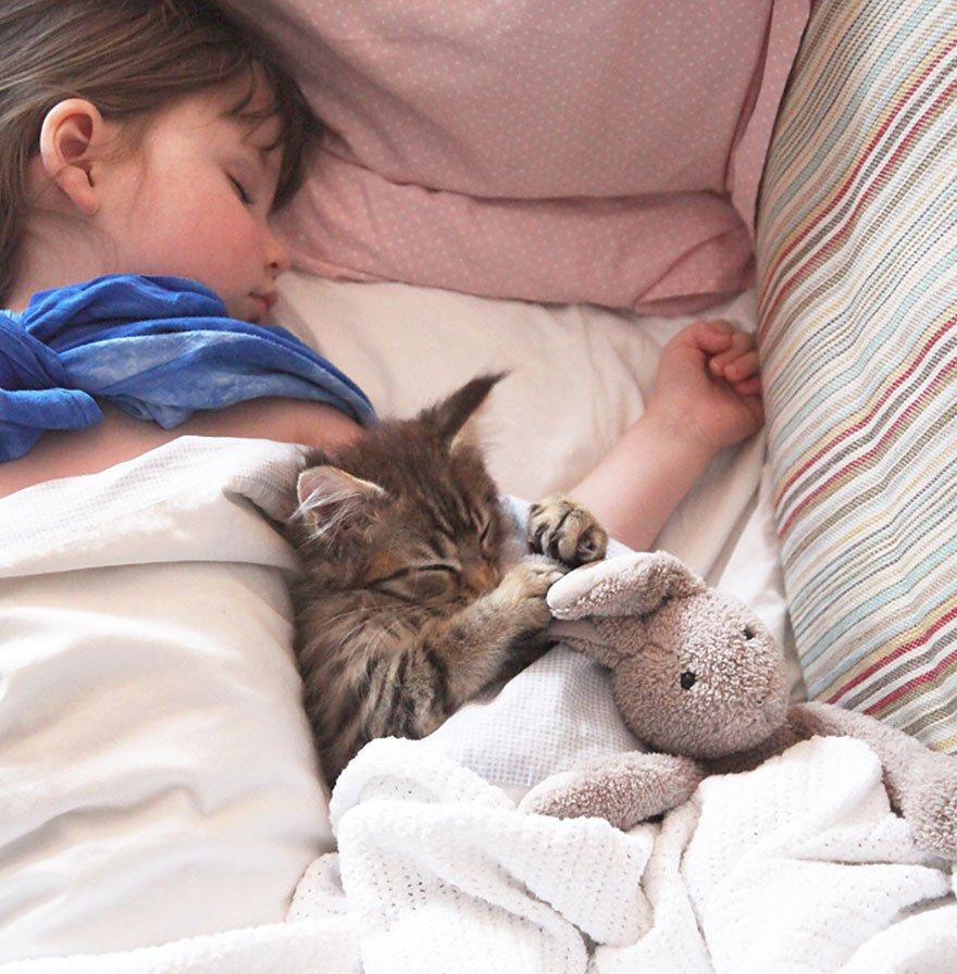 10 tình bạn đẹp không biên giới giữa người và động vật