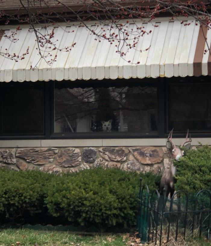 Suốt 11 năm ròng chú chó nhẫn nại đứng chờ chủ ở cửa, cho đến một ngày....