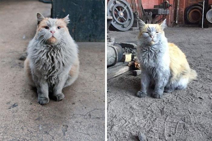 Khi những chú mèo cũng đi làm giống như con người