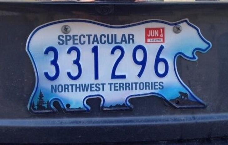 Bạn có biết ngỗng Canada là một loài rất 'cục súc'?