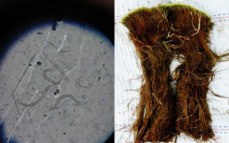 Các nhà khoa học đã 'tái sinh' giun cổ 40.000 năm tuổi bị đóng băng ở Bắc Cực
