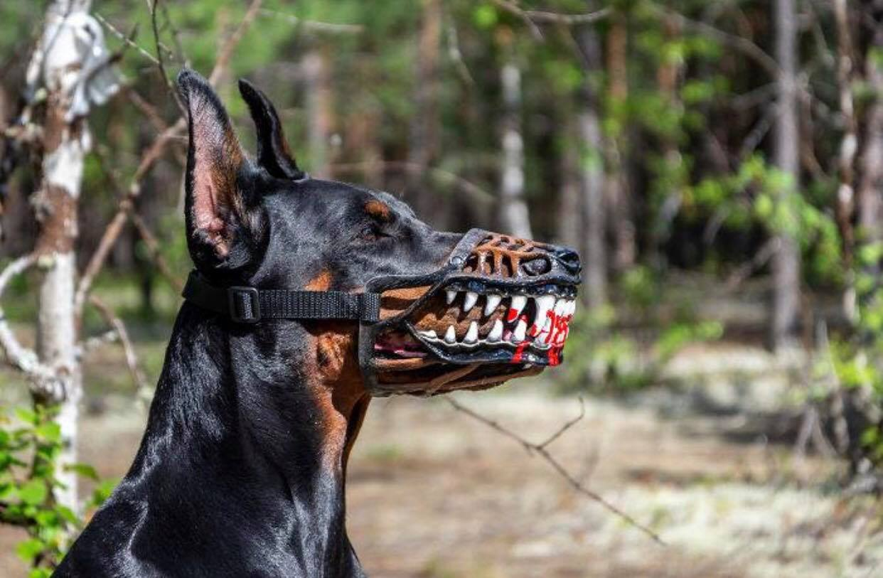 Trào lưu mua rọ mõm cho chó gây tranh cãi vì hình dáng quá ghê rợn và ám ảnh