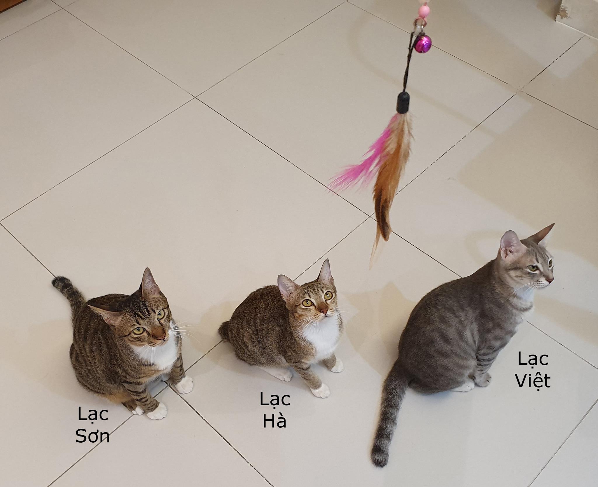 Đàn mèo tên Lạc với vẻ ngoài y chang nhau khiến cư dân mạng thảng thốt vì độ dễ thương