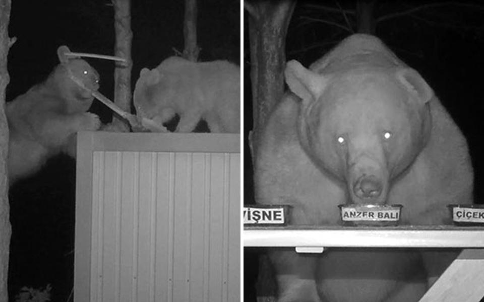 Gấu đến đến trộm mật ong, bác nông dân ranh ma lợi dụng chúng để test vị mật nào ngon nhất