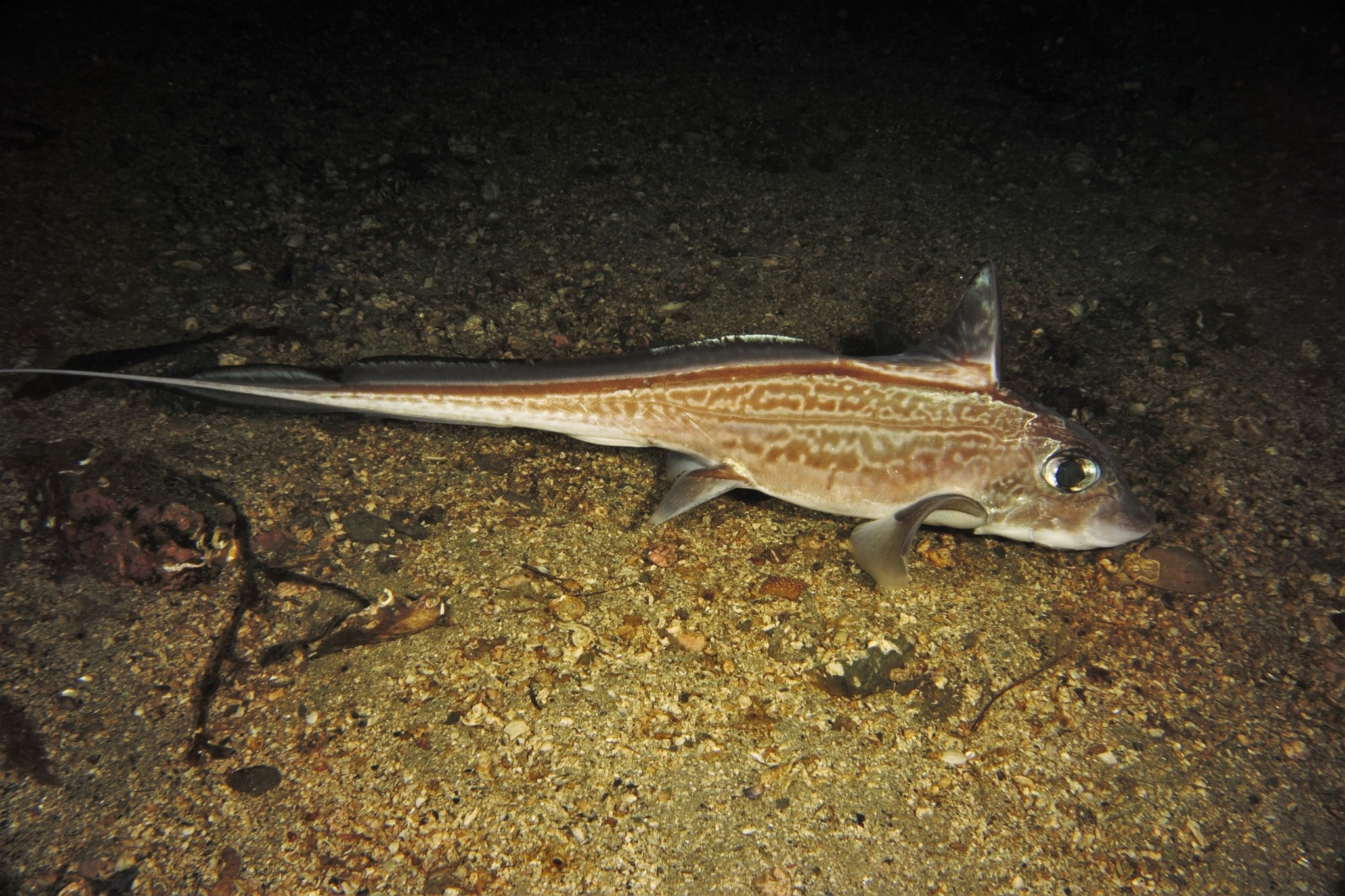 Ngư dân Na Uy bắt được cá có mắt to như đến từ ngoài hành tinh